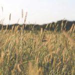 Kurze Geschichten – Der Bauer und sein Fürst