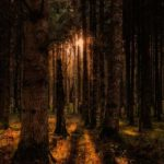 Kurze Geschichten – Der Rat von Finsterwald